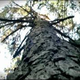 Docma-Forest Winch- Forstseilwinden-Treuil Forestier-Verricello forestale